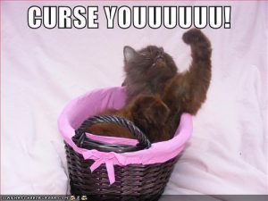 funny-pictures-angry-cat-curses-you