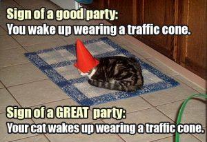 lolcat-wearing-traffic-cone