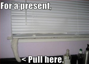 cat-blinds-tail-present