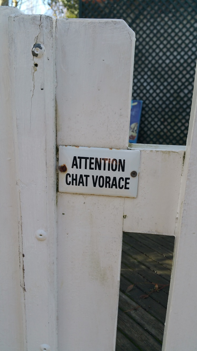 chat_vorace