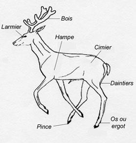 Un site web pour le droit du serf lionel davoust - Dessin bois de cerf ...